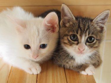 猫背の原因と簡単な治し方!もう姿勢が悪いと言われるのは嫌!