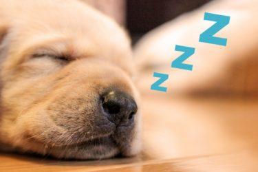 いびきがうるさい原因と対策のための防止グッズを紹介する